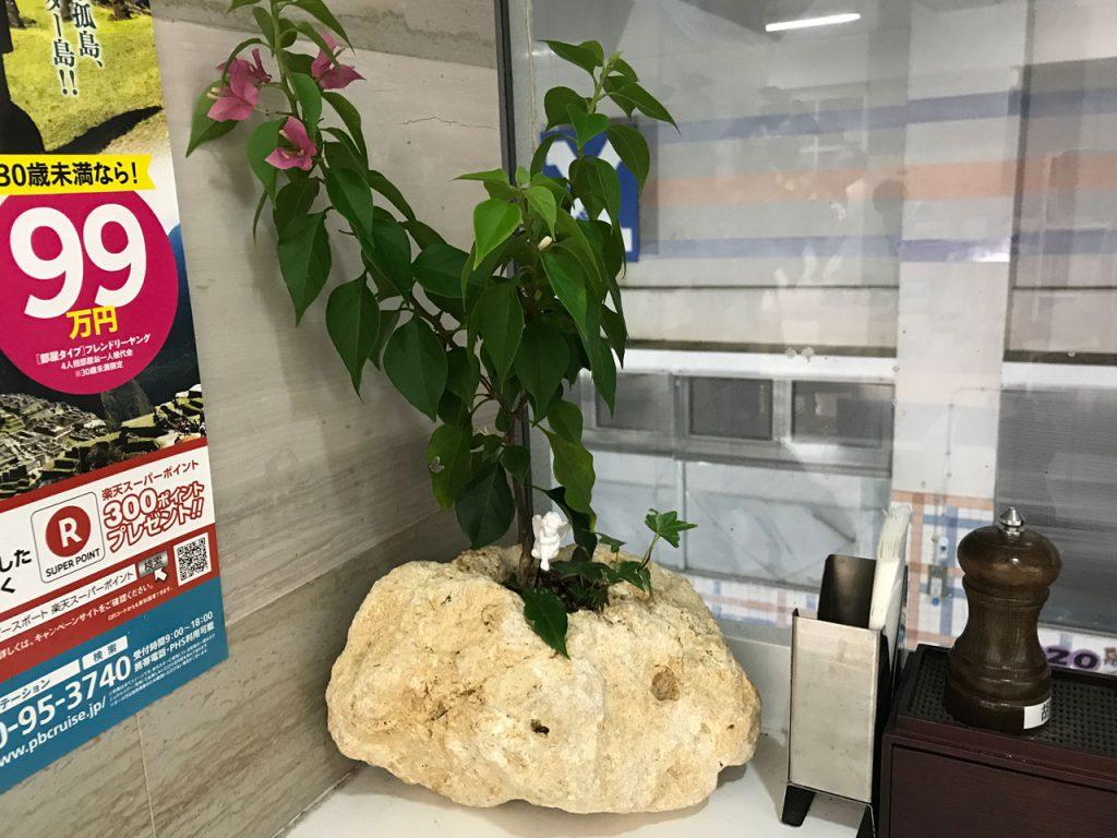 琉球石灰岩特殊アレンジメント ブーゲンビリア