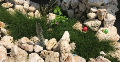 琉球石灰岩と洋芝を演出の石庭