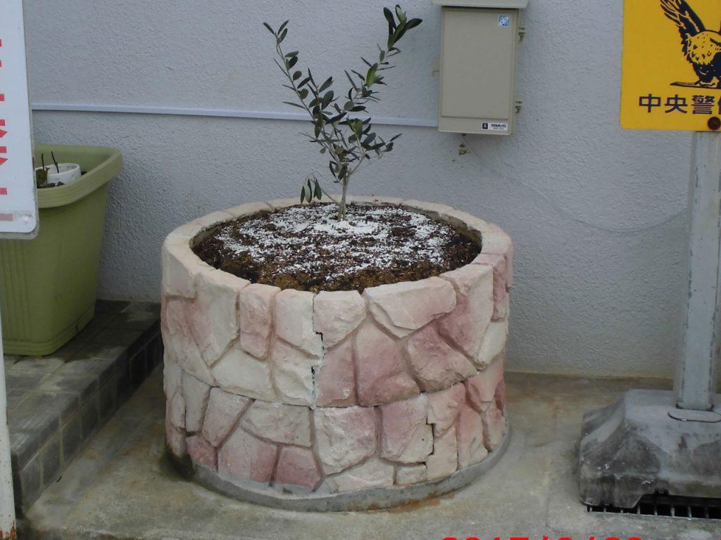 琉球石灰岩アレンジメント坪庭