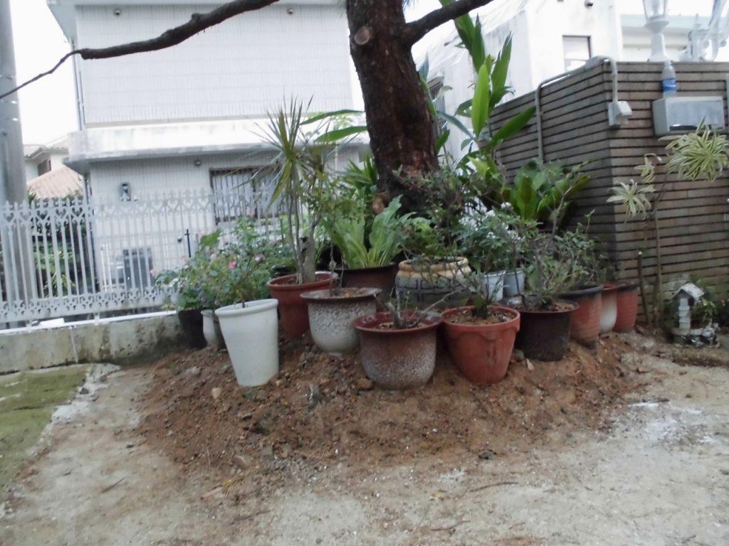 庭の琉球石灰岩施工前
