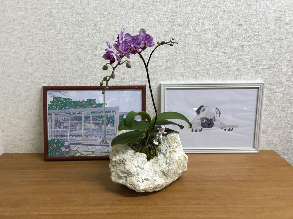 琉球石灰岩アレンジメント 特殊加工胡蝶蘭でアロマの香り 作品番号GF‐003