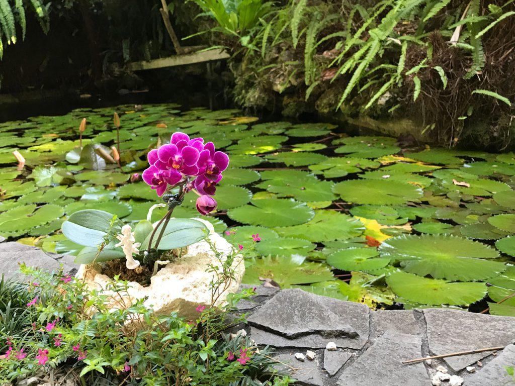 琉球石灰岩アレンジメント 琉球石化岩と胡蝶蘭 首里の龍潭の池にあるといいね!
