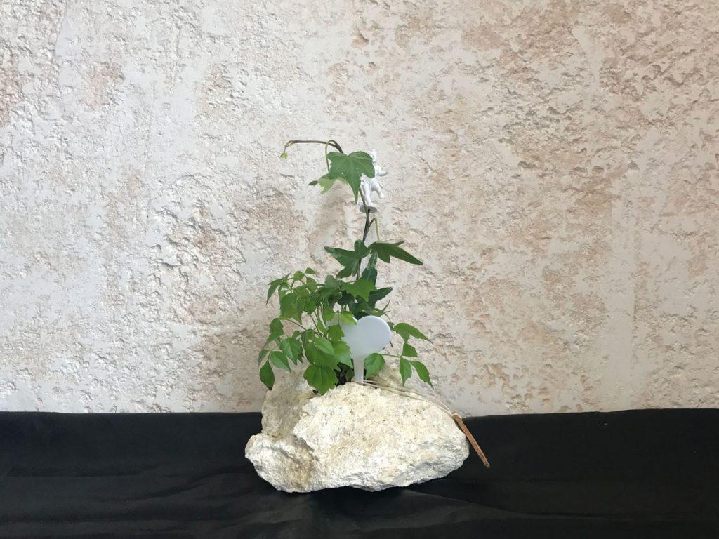 琉球石灰岩アレンジメント 緑 贈答品の人気商品