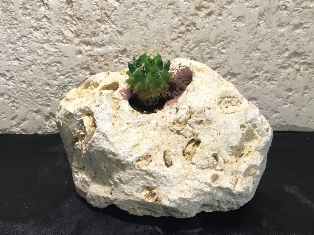 琉球石灰岩アレンジメント作品 ミニサボテン