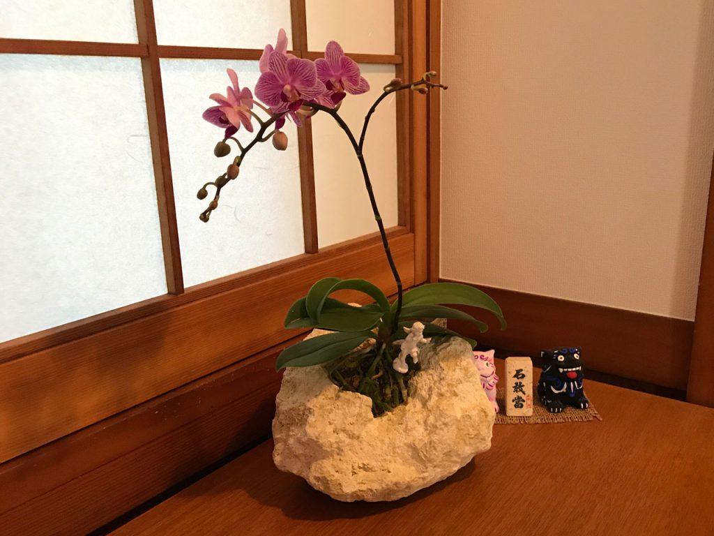 琉球石灰岩アレンジメント 胡蝶蘭がアロマの香り 作品番号GF‐003