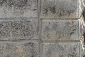 琉球石灰岩3年でカビ発生