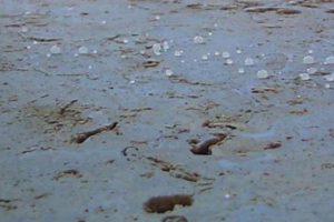 琉球石灰岩の長期美観維持方法