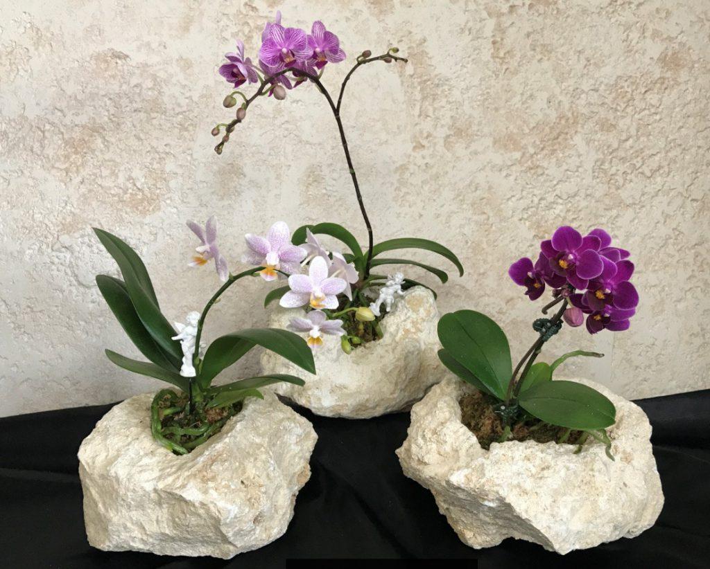 琉球石灰岩アレンジメント 特殊加工の琉球石灰岩と胡蝶蘭サイズS