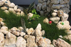 琉球石灰岩アレンジメント 石庭花壇